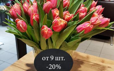 Тюльпан Премиум (Голландия)