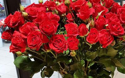 Роза кустовая 50 см (Кения)