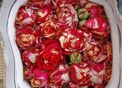 Роза кустовая 60 см (оптом) Кения