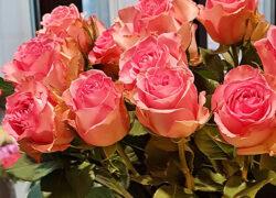 Роза 70 см (Эквадор)